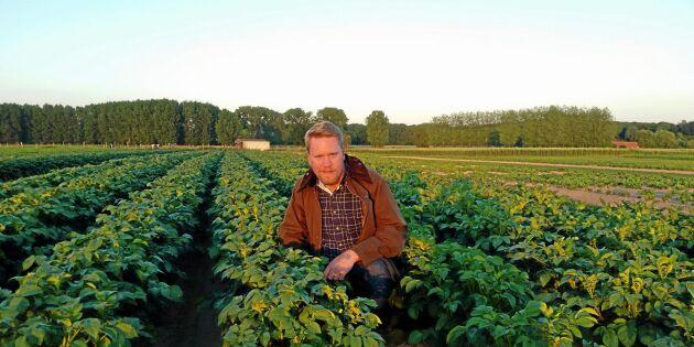 Inget regn i sikte - så påverkas grödorna