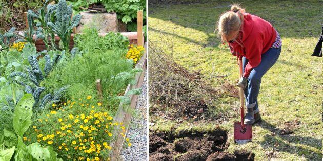 Mer mat på liten yta – så gräver du en djupbädd för odling
