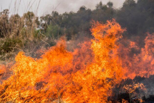 Brandrisken är stor i hela landet och eldningsförbud råder i många kommuner. Foto: Istock