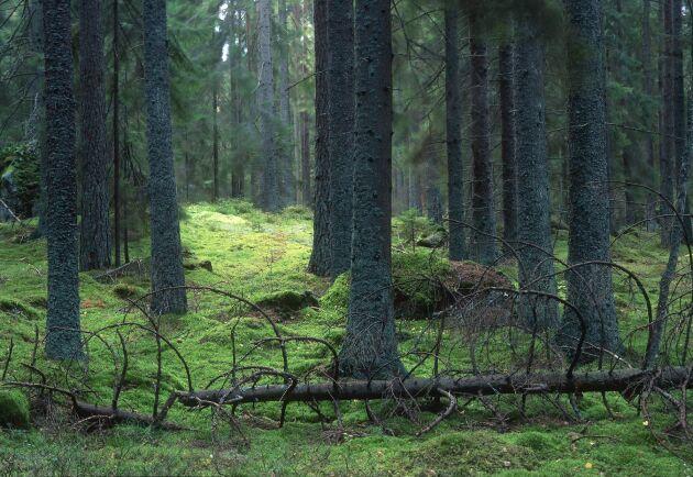 Skogsstyrelsen och Naturvårdsverket har beslutat att göra en översyn av sina gemensamma riktlinjer.