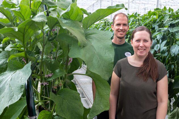 """Peter och Anette van Schie prioriterar att odla fler sorters grönsaker framför effektivitet. """"Vi jobbar för den lokala marknaden som vill ha ett bredare utbud"""", säger Anette van Schie."""