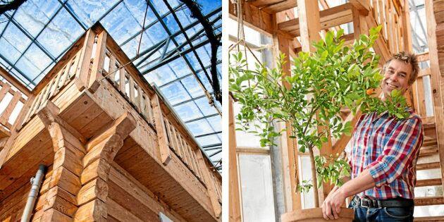 Ljust flödar in över timmerhuset och Anders har börjat förbereda citronträden för våren i växthuset.