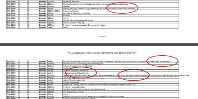 """Läkemedelsverkets lista över anmälda biverkningar på Bravecto från 1 januari och fram till i dag. """"Death by euthanasia"""", alltså död genom avlivning står vid flera fall samt ett fall av """"sudden death"""", plötslig död."""
