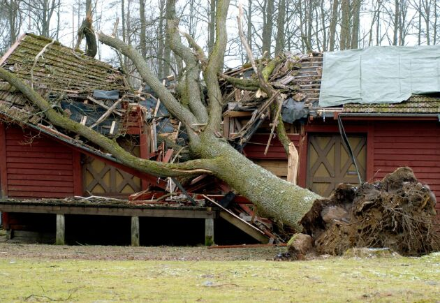 Hembygdsgården i Angelstad, Småland, krossades under en ek.