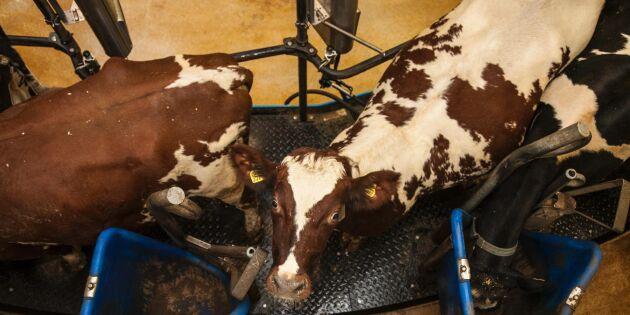Lägsta mjölkinvägningen på 20 år