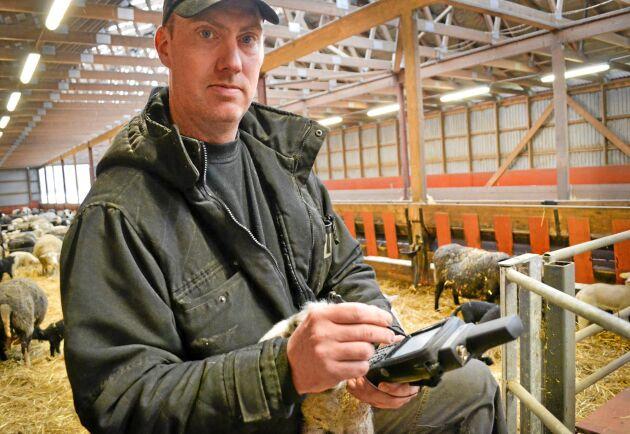 Tomas Olsson har haft bråda dagar med märkningen av lamm de senaste veckorna.