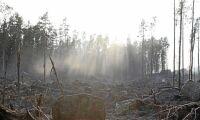 Skogsägare vill byta mark med staten
