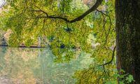 Risk för rasande grenar i värmen