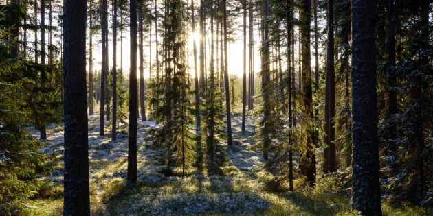 Dalarna ska få större skogsfastigheter