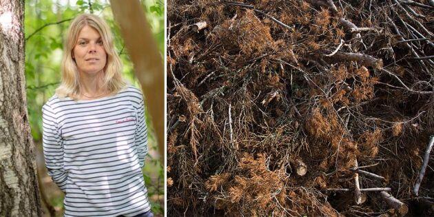 Osäkerheter hindrar skogsbrukets klimatomställning