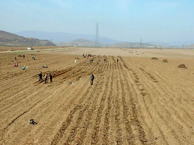 Det är manuellt arbete som gäller när det är dags att sätta potatis på ett nordkoreanskt kooperativ.