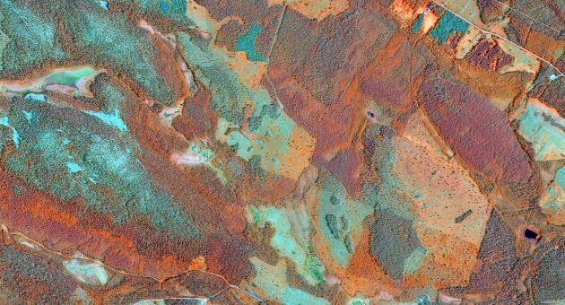 Satellitbilder ger viktig information om vegetationen och används i analyserna av riskområden och skador orsakade av granbarkborre. Illustration: Skogsstyrelsen