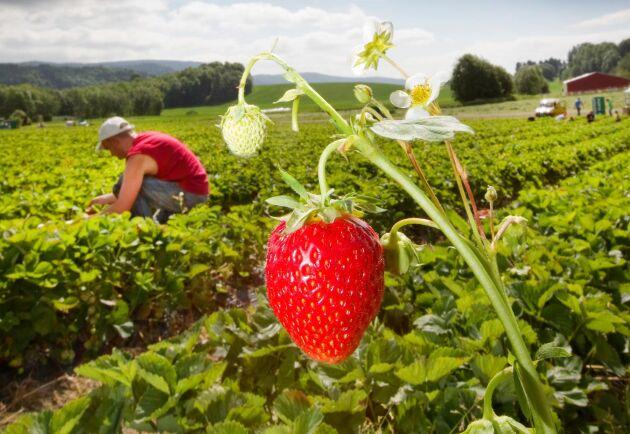 I en första beräkning har LRF kommit fram till att omkring 5000 personer kan erbjudas jobb i trädgårdsnäringen och 3000 i skogsnäringen.