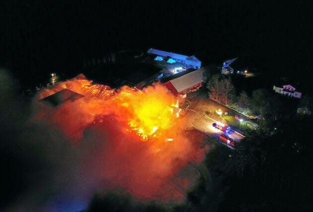 Inga människor skadades under branden, men runt 100 kor och ett 30-tal kalvar dog.