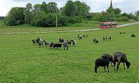 Kritik mot Landsbygdsprogrammet