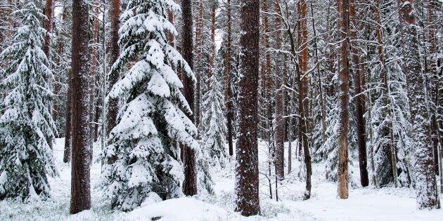 Nu ska 2000 hektar skogsmark skiftas