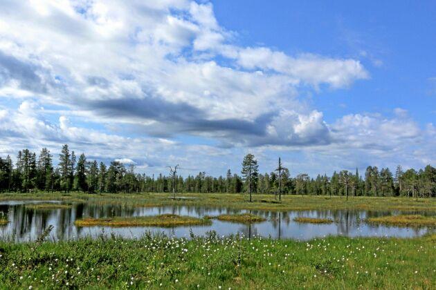 Det lokala skogsföretaget Jämtskogsägare i samverkan växer. Företaget vill vara ett alternativ för skogsägare i Jämtland och en oberoende aktör utan koppling till någon industri.