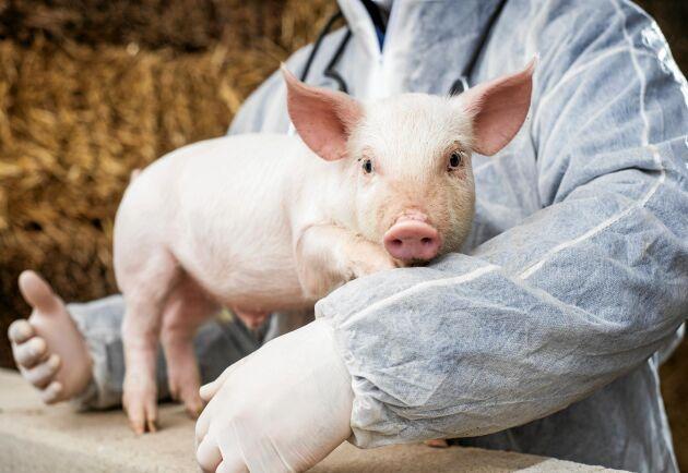 En ny EU-lagstiftning ska motverka antibiotikaresistens men också minska miljöpåverkan av veterinära läkemedel –något som Sverige under många år arbetat aktivt med.