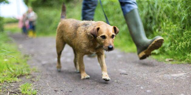 10 bra grejer som en promenad gör – för hund och människa