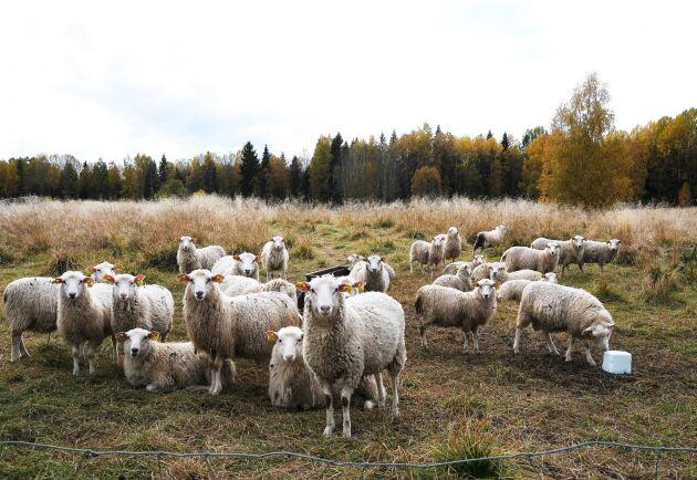 När får avviker från sitt flockbeteende ska systemet larma.