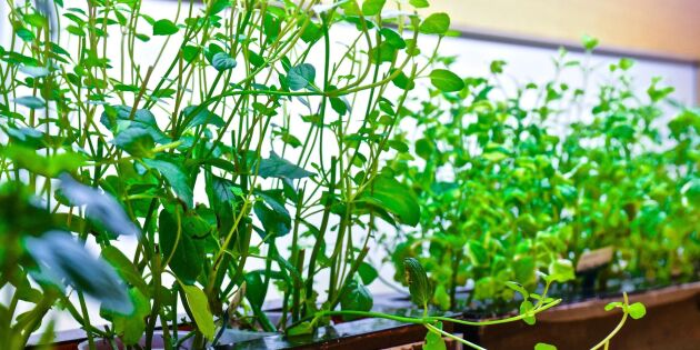 90 procent lägre skatt på smart odling