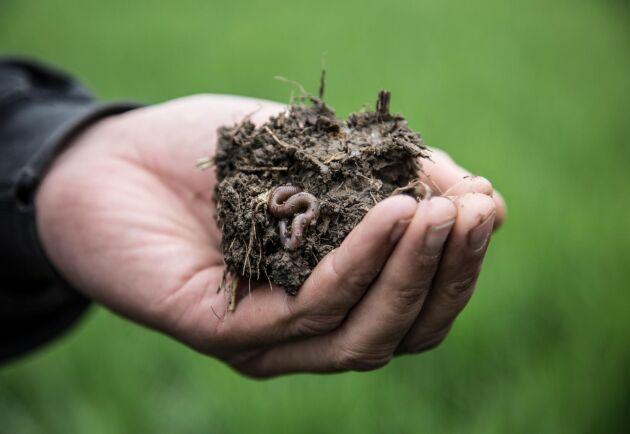 Begreppet jordhälsa handlar om en frisk och levande jord med mycket biologisk aktivitet.