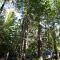 Så är läget för Levande skogar