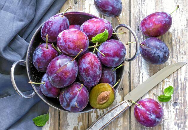 Har du lyckan att få för många plommon jämfört med vad du hinner äta upp, är det smart att frysa in dem!