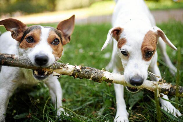 Här finns energi att hämta, hos våra hundar.