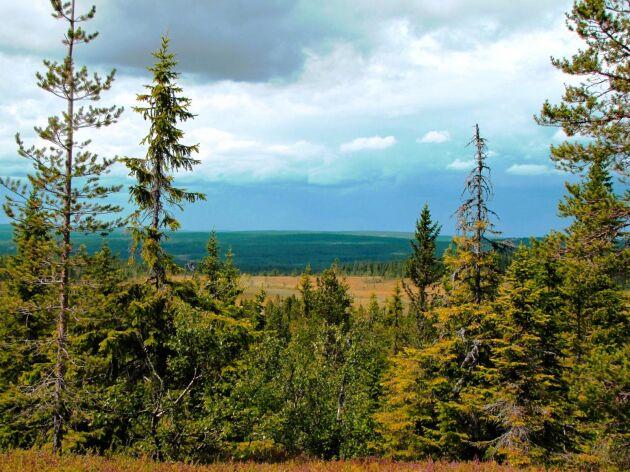 Finnskogen kan bli världsarv.