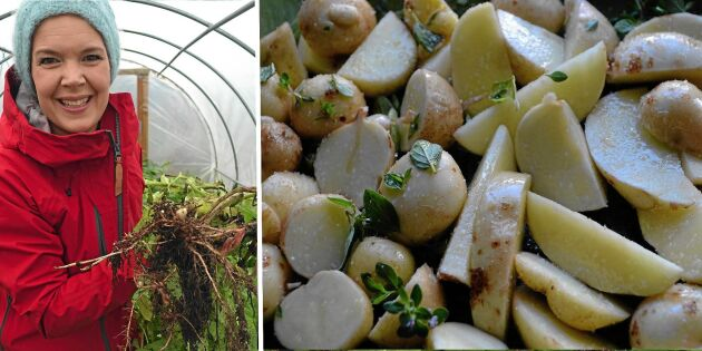 Odla potatis: Sara Bäckmos bästa tips
