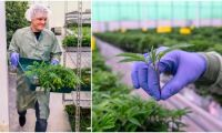 Han vill bli störst i Europa på laglig cannabis