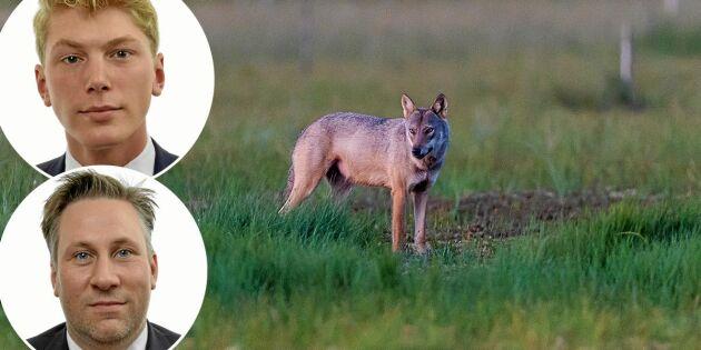 """Debatt: """"Låt Sverige bestämma rovdjurspolitiken – inte Bryssel!"""""""