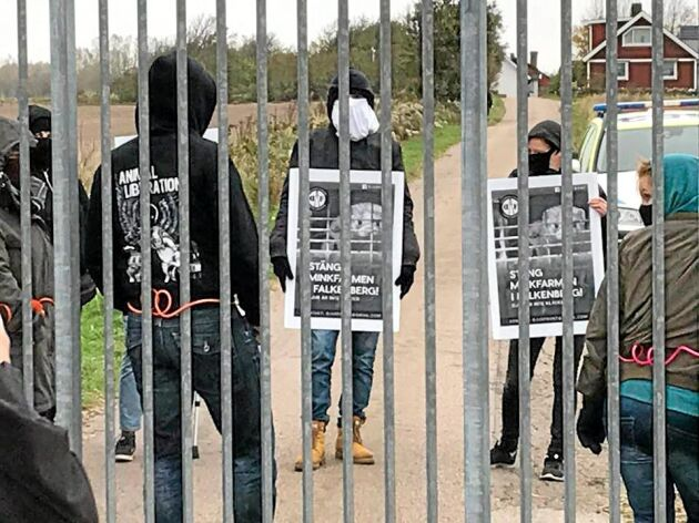 Polisutredningen kring den djurrättsgrupp som har trakasserat en minkuppfödare utanför Falkenberg drar ut på tiden eftersom förhör som ska hållas inte blir av.