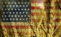 Så påverkar spannmålspriset av Trump-seger