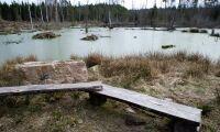 Motverkar torkan med våtmarker