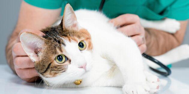 Varning: Katter kan förgiftas av vanligt musgift