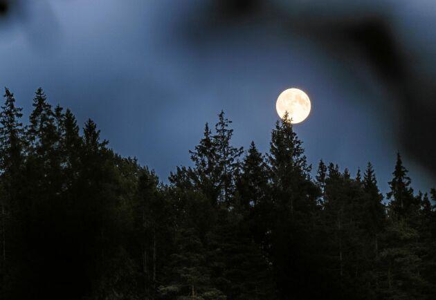 Visste du att fullmånen hjälper dig att hålla koll på när påsken infaller?