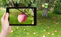 Apple-träd ska göra företaget koldioxidneutralt