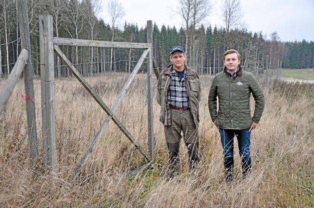 Boo egendom har fyra hägn på totalt cirka tio hektar. Här ska det bli björkskog som ska hålla borta dovhjortarna från åkern. Skogvaktare Ingemar Karlsson och vd Carl-Fredrik Hamilton.
