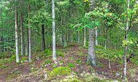 Så mycket skogsmark fick formellt skydd 2017