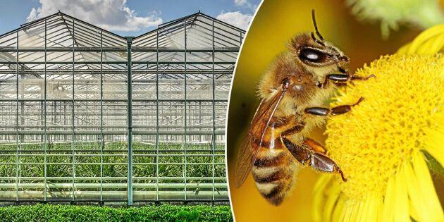 Larmet: Gifter som dödar bin läcker från växthus i Sverige