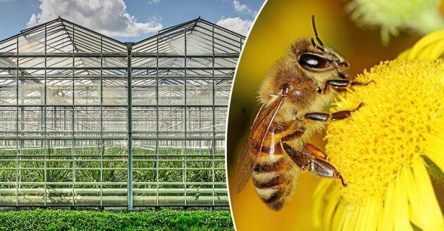 Imidakloprid är förbjudet att använda utomhus eftersom det dödar bin och andra pollinerare. Nu visar det sig att giftet läcker ut från växthus.