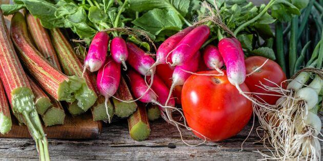 Mat i säsong: 15 svenska råvaror du ska passa på att äta i juni