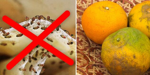 Undvik fluginvasion – 6 rutiner som håller bananflugorna borta