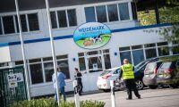 Ny våg av coronasmitta på tyska slakterier