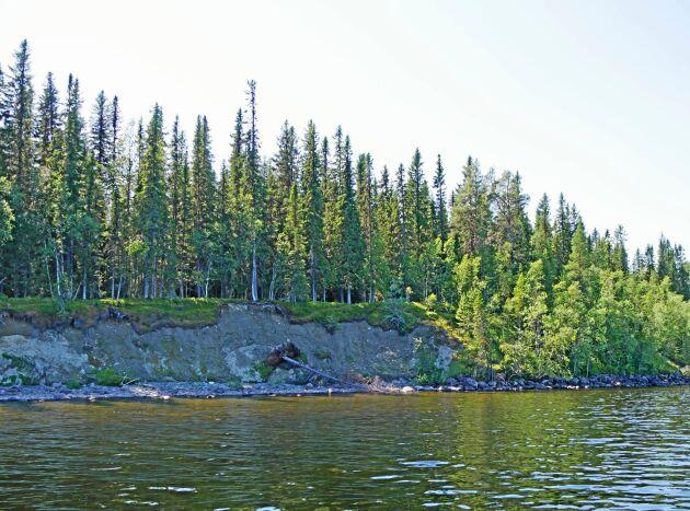 På den aktuella fastigheten, som ligger längs sjön Malgomajs strand i Vilhelmina, har erosionsskador uppkommit under en längre tid.