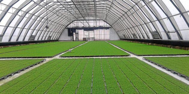 Torr vår ställer nya krav på plantleverantörer