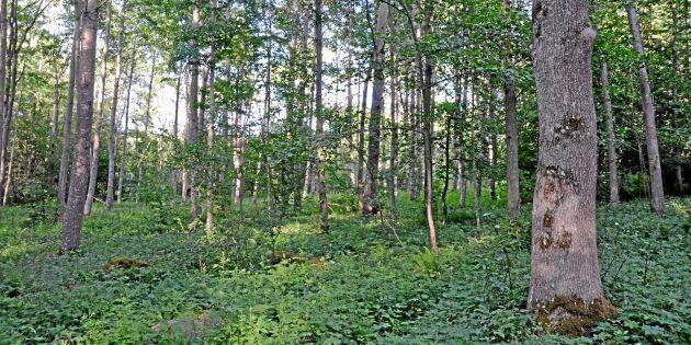 FSC-certifiering slår mot små skogsbrukare