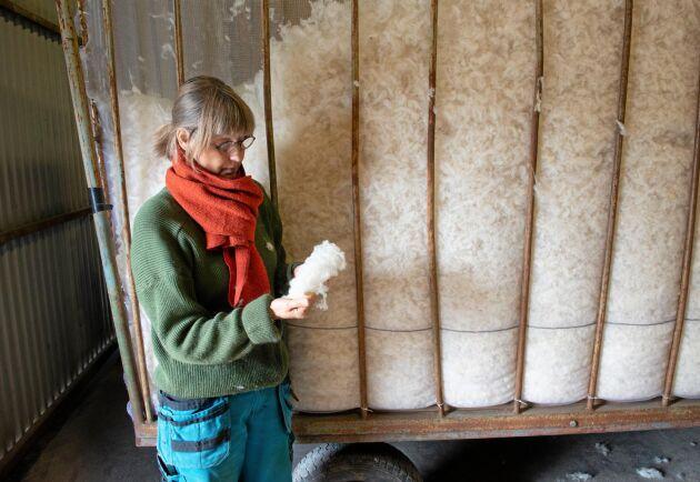 Rensorterad ull från vit texel väntar på vidareförädling. Rasen har styvare fiber och lämpar sig särskilt bra till isolering.